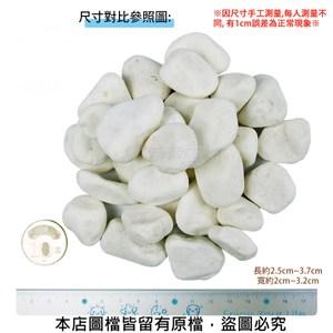 極白石 5分 20公斤±5%裝 (漢白玉.特白石.鵝卵石.白卵石)