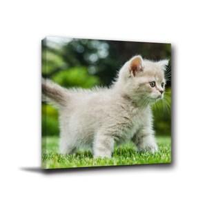 24mama掛畫-單聯式 貓咪掛畫 毛小孩紀念 無框畫 30x40cm