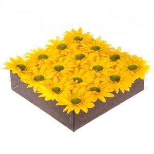 綠野仙蹤非洲菊盆花 黃色 大