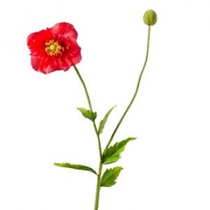 罌粟花-紅