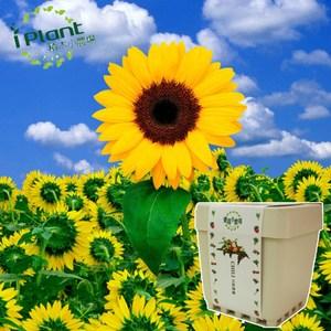 iPlant積木小農場-向日葵