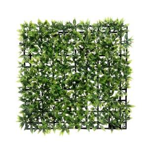 綠葉帶果草