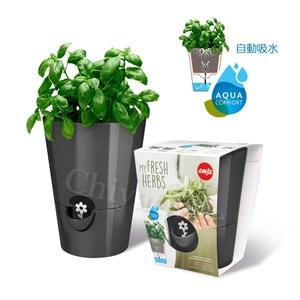 【德國EMSA】園藝自動澆水吸水器 美化花盆植栽盆栽 浮標缺水提示-黑