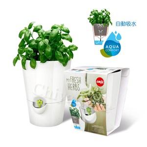 【德國EMSA】園藝自動澆水吸水器 美化花盆植栽盆栽 浮標缺水提示-白
