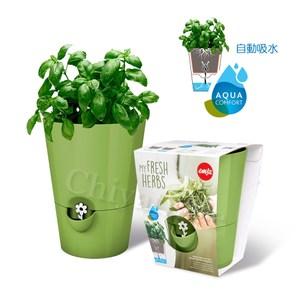 【德國EMSA】園藝自動澆水吸水器 美化花盆植栽盆栽 浮標缺水提示-綠