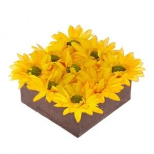 綠野仙蹤非洲菊盆花 黃色 小