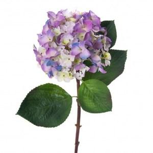 多瓣繡球花 紫