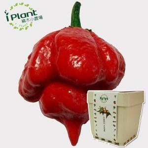 iPlant 積木小農場 - 魔蠍椒