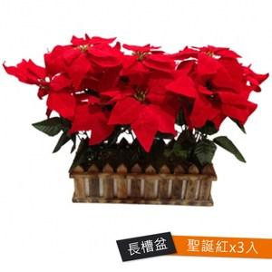 #499聖誕紅長槽盆 3個