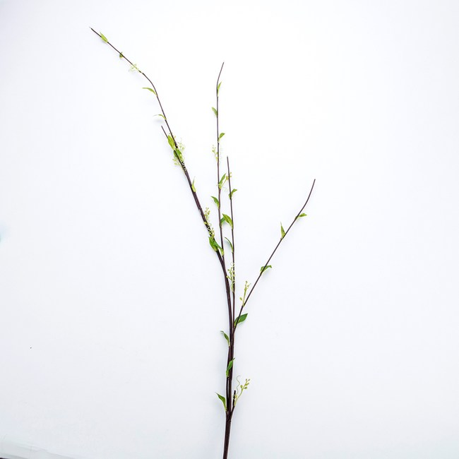 嫩葉柳枝 綠