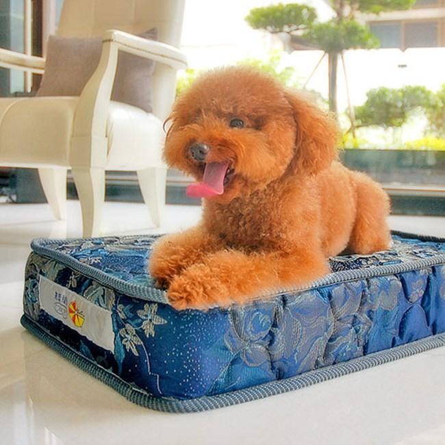 【凱蕾絲帝】寵物特大型寵物專用獨立筒彈簧床墊組-60*120*11cm
