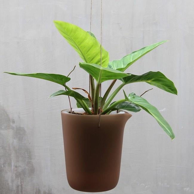 QUALY|綠洲-免澆水圓形花器L(咖啡)