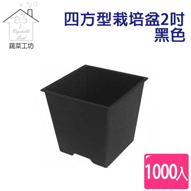 四方型栽培盆2吋-黑色(厚) 1000個/件