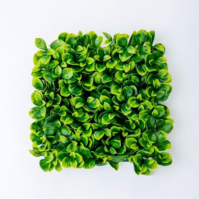 Green Hero 蘋果葉草皮