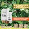 梅の生活 100%完整濃縮 梅精錠